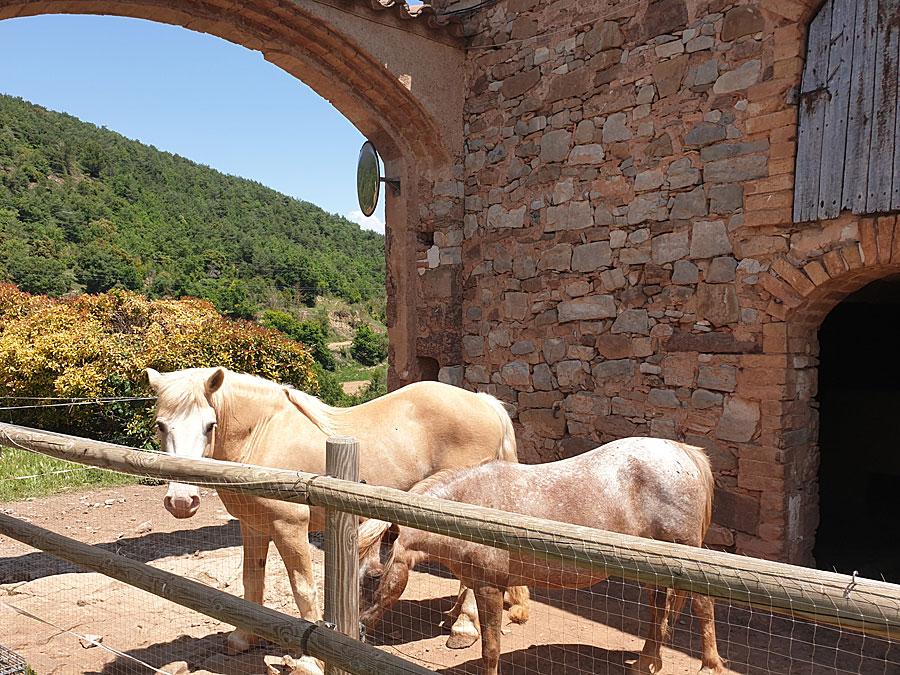 Animals Turisme de Natura Moià