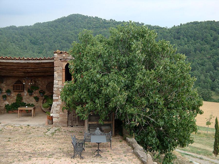 Vistes del jardí La Fleca Turisme Rural Moià 7